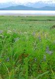 Paesaggio verticale dell'Alaska dei Wildflowers con la baia e le montagne Fotografia Stock Libera da Diritti