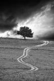 Paesaggio verticale di Bw fotografia stock libera da diritti