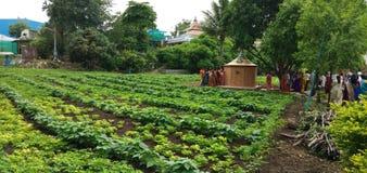 Paesaggio vibrante dell'azienda agricola fotografia stock