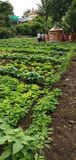 Paesaggio vibrante -2 dell'azienda agricola fotografie stock