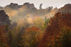 Paesaggio vibrante della bella di autunno foresta di caduta immagini stock libere da diritti