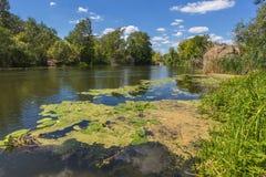 Paesaggio vicino al fiume di Myhiia l'ucraina immagini stock libere da diritti