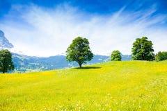 Paesaggio vicino alle alpi di estate Fotografia Stock Libera da Diritti