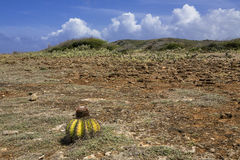 Paesaggio vulcanico con il cactus Fotografie Stock