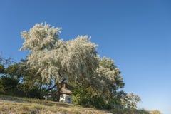 Paesaggio in Wulfen fotografie stock libere da diritti