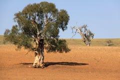 Paese Australia Fotografia Stock
