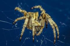 Paese Basco del ragno Fotografia Stock Libera da Diritti