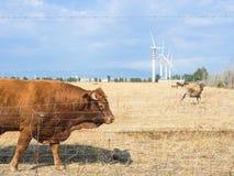 Paese bovino delle turbine fotografie stock libere da diritti