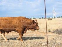 Paese bovino delle turbine immagini stock libere da diritti