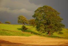 Paese britannico - paesaggio rurale Fotografie Stock