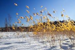 Paese colors-5 di inverno Immagine Stock