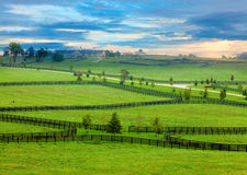 Paese del cavallo Fotografia Stock