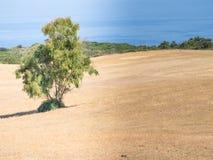 Paese della Sardegna selvaggio Fotografie Stock Libere da Diritti