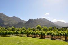 Vigne Sudafrica del vino francese fotografia stock libera da diritti
