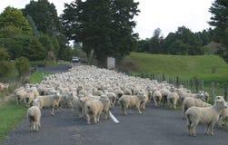Paese delle pecore Immagini Stock Libere da Diritti