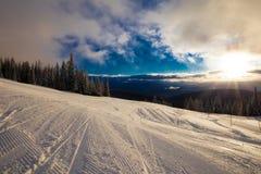 Paese di corsa con gli sci della foresta fotografia stock