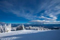Paese di corsa con gli sci della foresta Immagine Stock