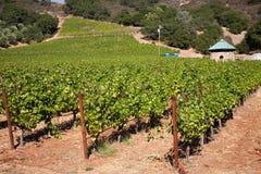Paese di vino Immagine Stock