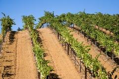 Paese di vino Immagine Stock Libera da Diritti