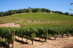 Paese di vino Fotografia Stock Libera da Diritti