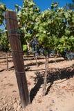 Paese di vino Immagini Stock Libere da Diritti