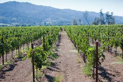 Paese di vino Fotografie Stock