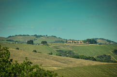 Paese di vino di California Immagine Stock Libera da Diritti