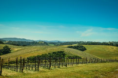 Paese di vino di California Immagine Stock