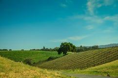 Paese di vino di California Fotografie Stock