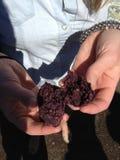 Paese di vino di fabbricazione porpora dell'uva della cantina della poltiglia del vino immagine stock libera da diritti