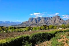 Paese di vino nel Sudafrica Fotografia Stock Libera da Diritti