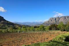 Paese di vino nel Sudafrica Fotografia Stock