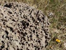 Paese selvaggio del fiore della roccia di Ectraterrestrial immagini stock libere da diritti
