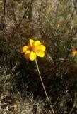 paese selvaggio giallo della pianta verde del fiore fotografia stock libera da diritti