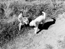 Paese selvaggio libero di amore della via del cane fotografia stock