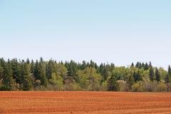 Paese Treeline Fotografie Stock
