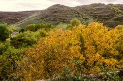 Paesino di montagna nel giorno piovoso di autunno con la noce ingiallita Fotografia Stock