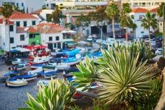 Paesino di pescatori di Camara de Lobos con la palma nella priorità alta Isola del Madera, Portogallo Immagine Stock Libera da Diritti