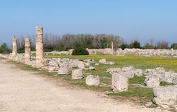 Paestum Archaeological site, Italy Royalty Free Stock Photography