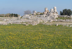 Paestum Archaeological site, Italy Stock Photography