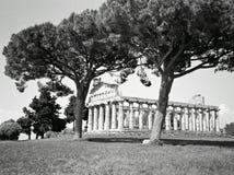 Paestum. Temple of Paestum Royalty Free Stock Image