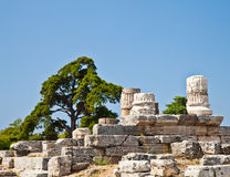 Paestum temple - Italy Royalty Free Stock Image