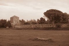 Paestum walls. The ancient greek walls of paestum in south italy Royalty Free Stock Photos