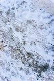 Paga e stampe della gomma sulla neve Fotografia Stock