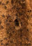 Pagdeni sin aguijón de Trigona de la abeja Imágenes de archivo libres de regalías