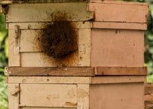 Pagdeni sin aguijón de Trigona de la abeja Fotos de archivo