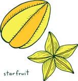 Page de coloration de carambole Art coloré de griffonnage de vecteur graphique pour illustration stock