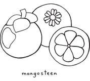 Page de coloration de mangoustan Art noir et blanc de vecteur graphique pour illustration stock