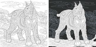 Page de livre de coloriage avec le chat sauvage illustration libre de droits