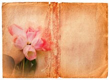 Page grunge de livre avec les tulipes roses Image libre de droits